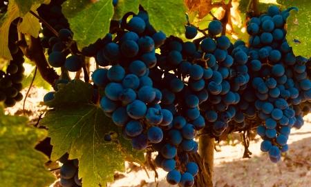 Tempo, Vino e Cioccolato d'autore a Via Montenapoleone